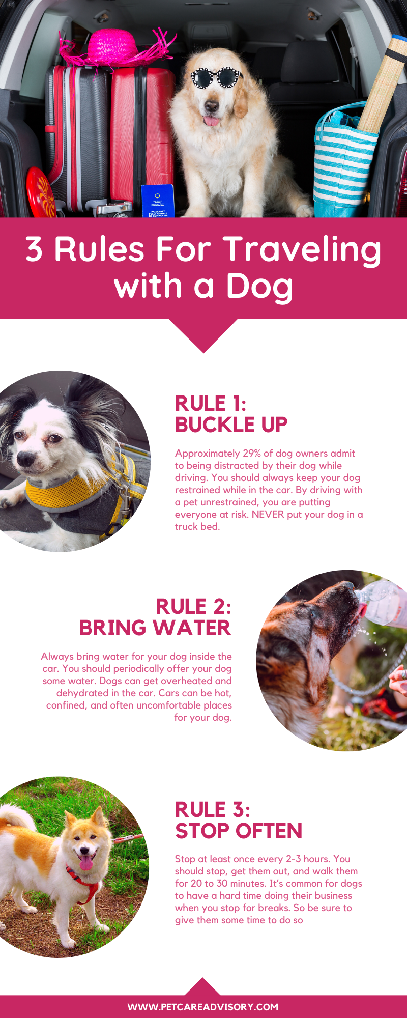 Rules for Traveling with a Dog in the Car Infographic