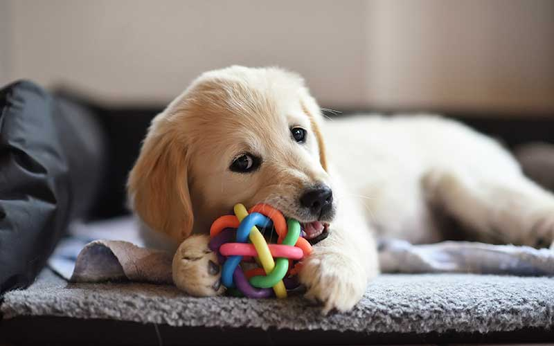 Buy Dog Toys and Food Puzzles