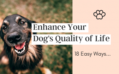 18 Easy Ways You Can Enhance Your Dog's Quality of Life