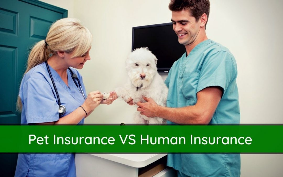Is Pet Insurance the Same as Health Insurance? Explained