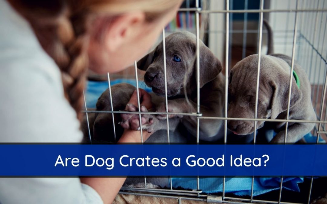 Are Dog Crates a Good Idea?