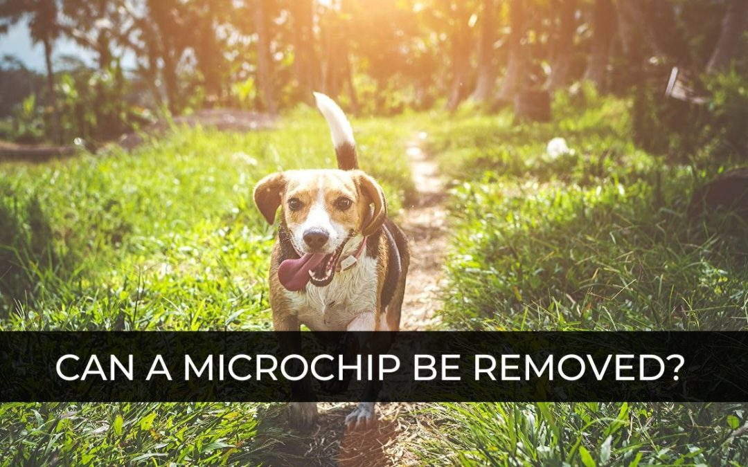 can a microchip be removed from a dog