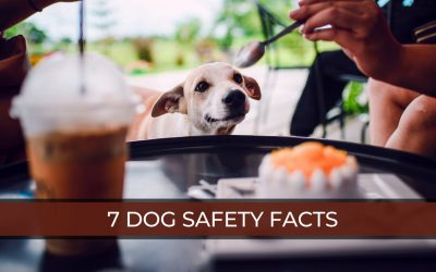 Dog Safety Facts: 7 Safety Facts Every Dog Owner Should Know