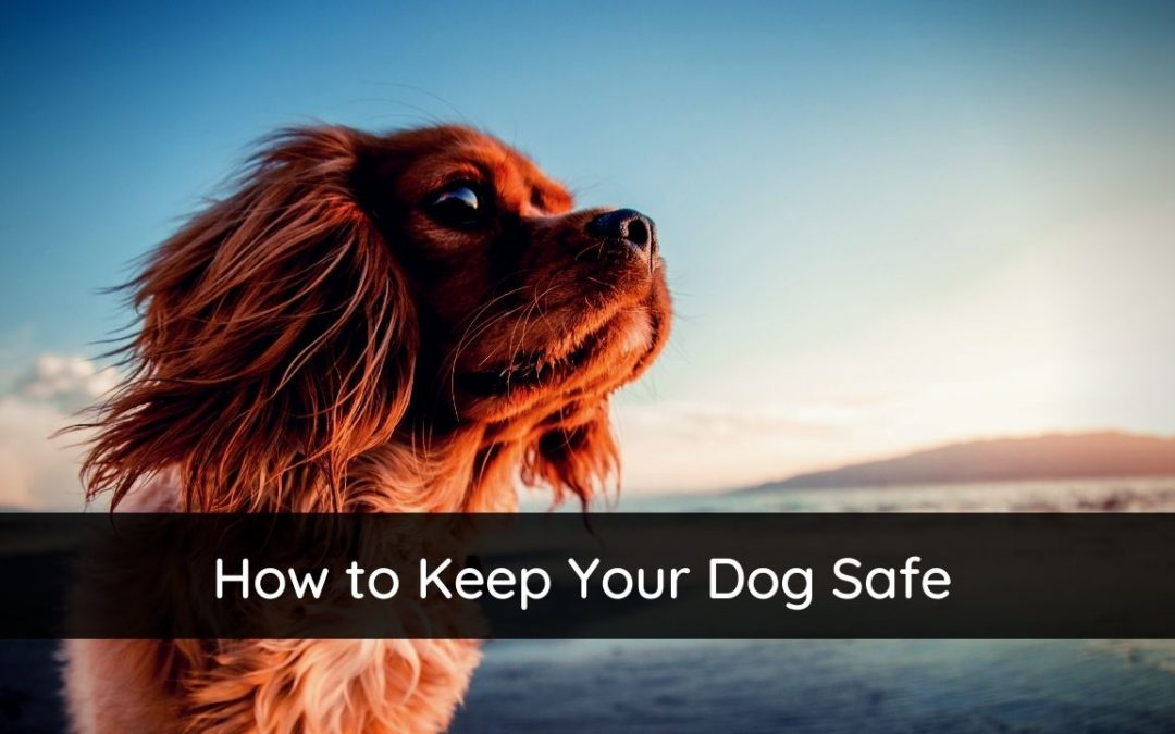 How To Keep Your Dog Safe – A Simple Guide To Dog Safety