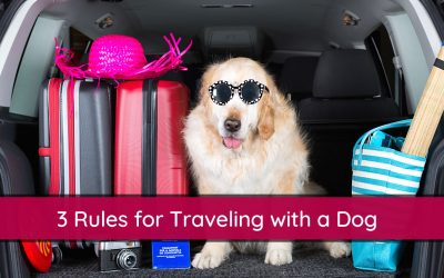 3 Rules for Traveling with a Dog in the Car – Dog Car Rules